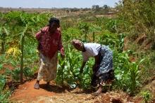 Smallholders in Kenya