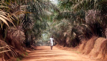 Liberia_landsecurity