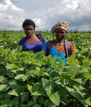 Farmers in Soybean field in Mozambique