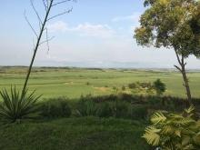 Sugar plantation fields in Kwilu Ngongo, Bas Congo, Democratic Republic of the Congo. Photo © Julia Doublait