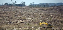 Oil palm cultivation in Indonesia and Malaysia has seen local agricultural economies move from semi-subsistence smallholdings on customary lands to big monoculture plantations using low wage labour (Photo: Rainforest Action Network, Creative Commons via F