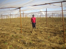 Land and compensation in Zimbabwe: frequently asked questions